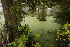 desktop wallpaper of Cypress Lake at UL Lafayette on a foggy day