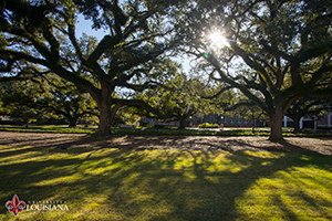 Desktop wallpaper of two oak trees on UL Lafayette campus